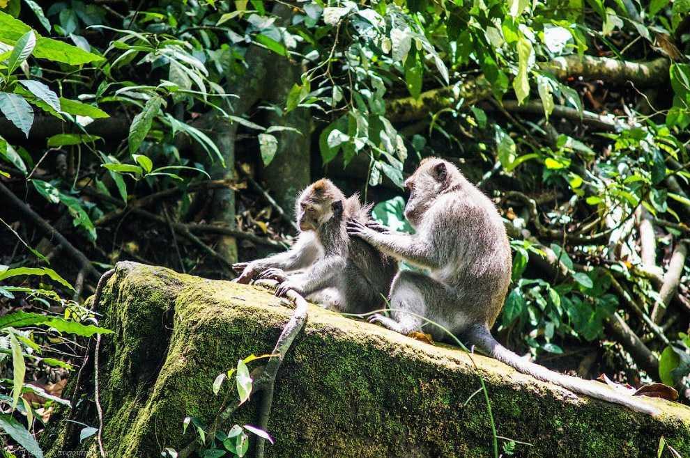 10 мест на Бали, которые должен посетить каждый