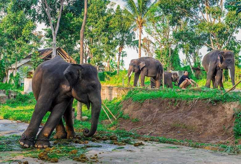 Самые красивые природные парки Бали