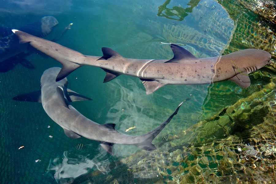 Есть ли акулы на Бали?
