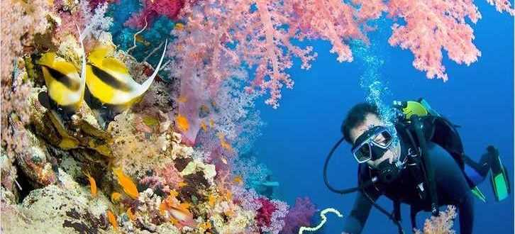 dajving na bali 3 726x330 - Дайвинг на Бали