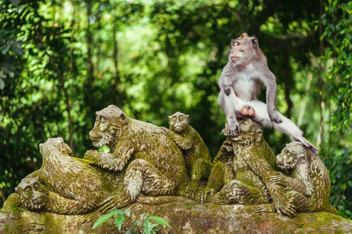 Лес обезьян в Убуде 9