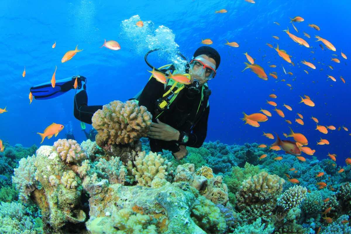 Кораллы на Бали