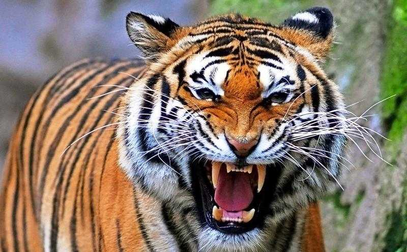 Хищники Бали 6