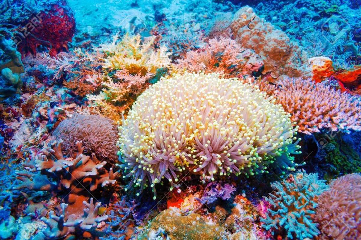 Кораллы на Бали 6