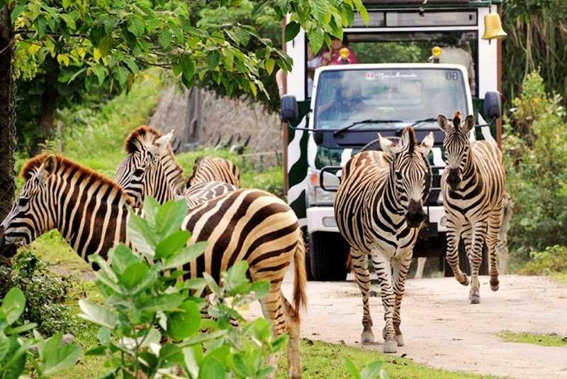 Хищники на Бали