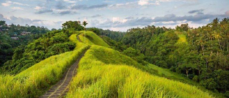 2016 03 22 1635 1458634923. large 770x330 - Как добраться до Убуда на Бали