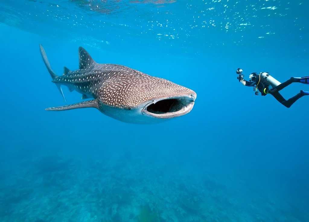 Морские обитатели Бали