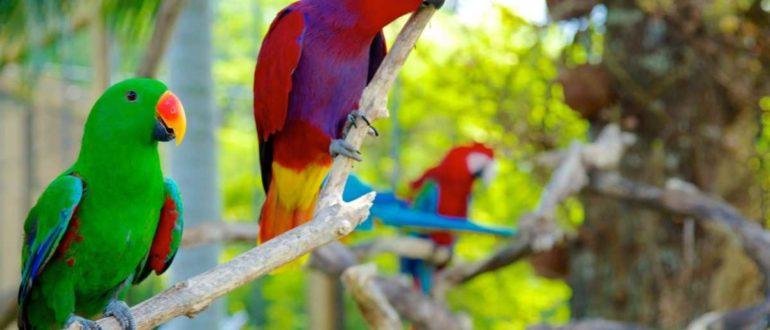 42411 Bali Bird Park 770x330 - Парк птиц на Бали