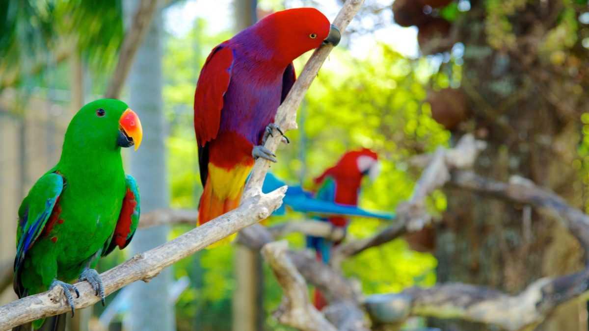 Парк птиц на Бали 1