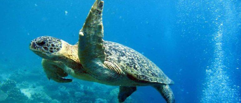 456466 turtle wallpaper images 770x330 - Морские обитатели Бали