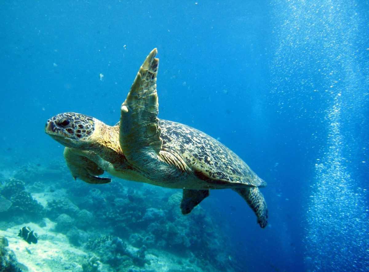 Морские обитатели Бали 5