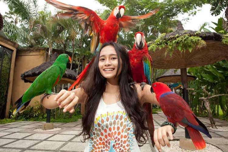 Птицы на Бали 9