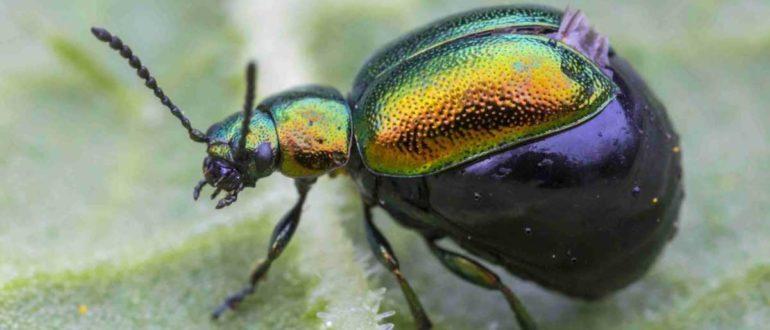 insectabdomen 58f23ef25f9b582c4d07bd00 770x330 - Насекомые на Бали