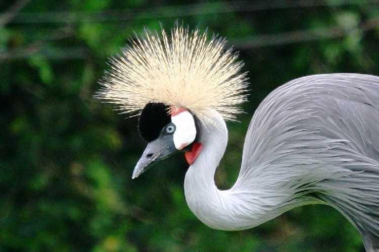 Птицы на Бали