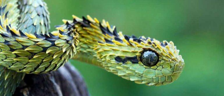 viper 1024x576 w900 h600 770x330 - Змеи на Бали