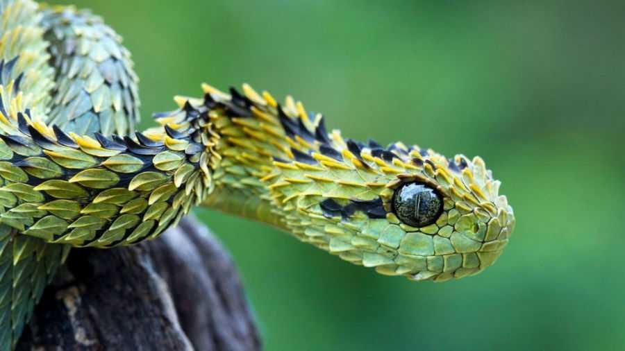 Змеи на Бали 7