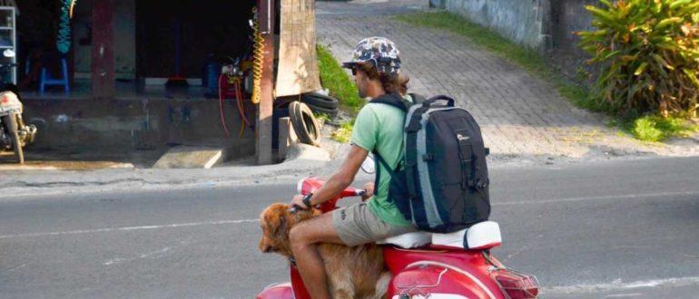 voditelskie prava na bali 770x330 - Штрафы на Бали