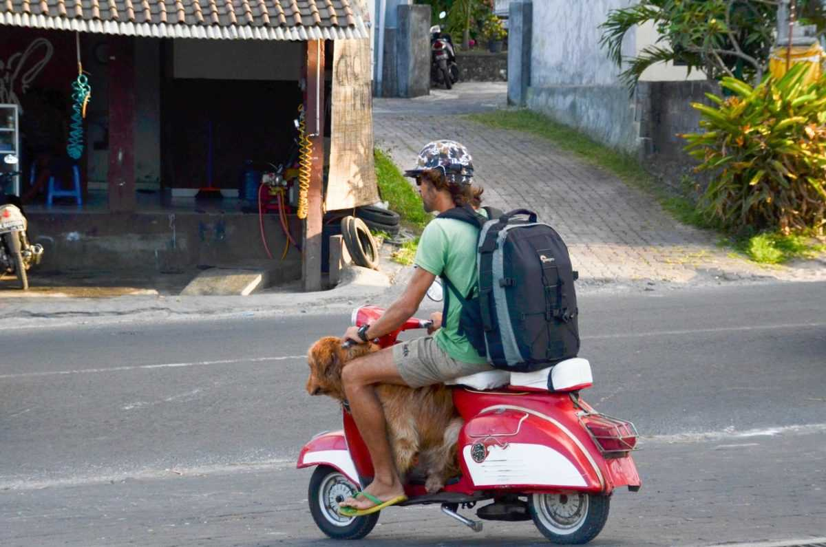 Штрафы на Бали 3
